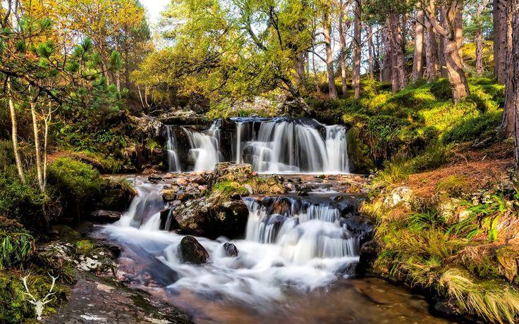 природа, лес, деревья, кусты, река, камни, водопады