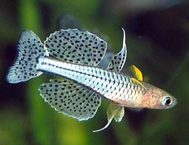 Pin On Cool Fish Tanks