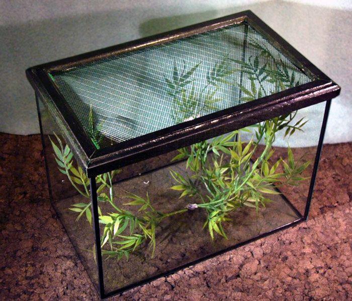 Przerobione Akwarium Pokrywa To Ramka Z Wklejona Siatka Hodowla Motyli Krajowych Decor Terrarium Home Decor