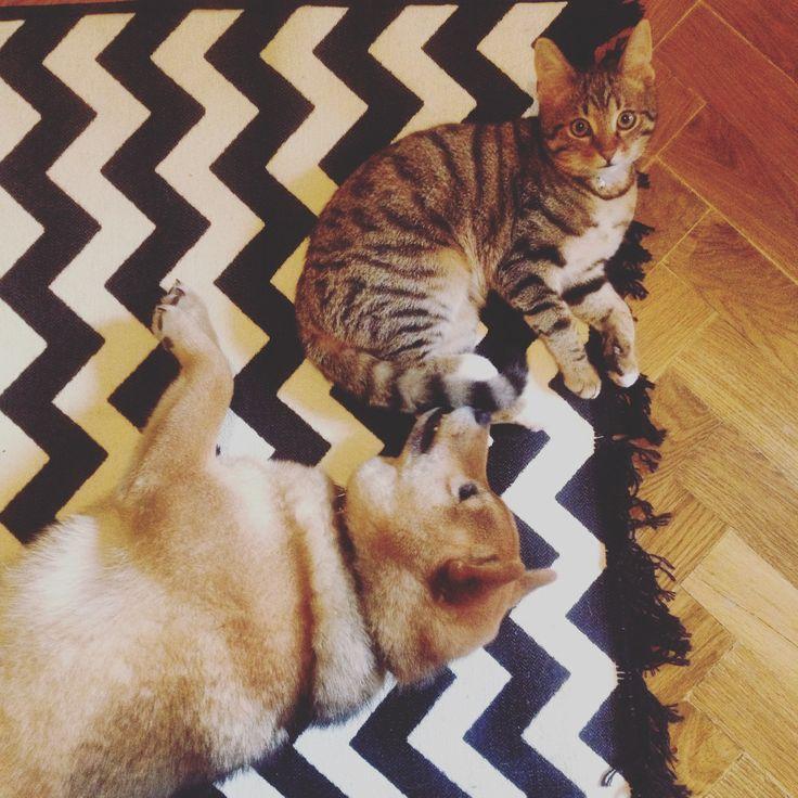 Favorite carpet #blackandwhite #bw #carpet #favoritecarpet #pets #dog #cat #stripes #stripesdesign #geometric #pattern #carpetpattern #blackandwhitecarpet #stripescarpet #minimalism