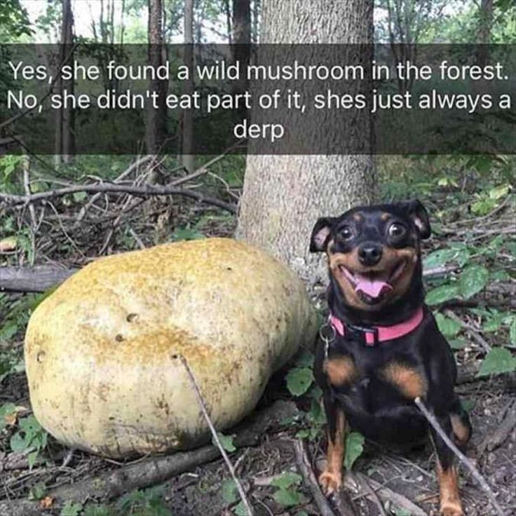 23 Funny Animal Pictures Of The Day – Littlejoe