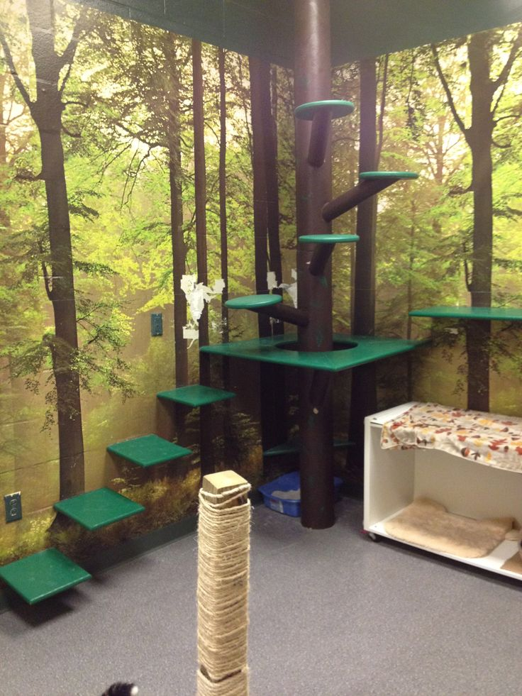 349 best home: catio ideas!!!! (cat patio) images on pinterest ... - Cat Patio Ideas