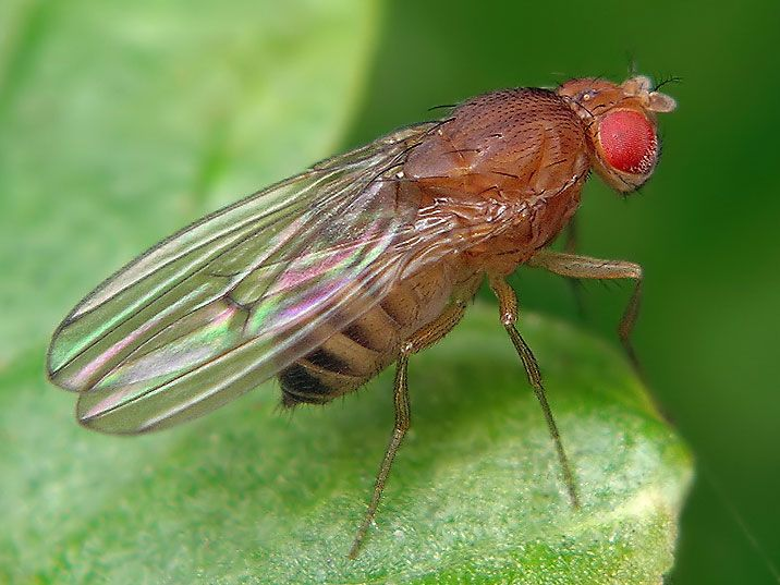 The lifespans of flies and worms are prolonged by limiting the activity of an enzyme common to all animals, finds a UCL-led study. The enzyme – RNA polymerase III (Pol III) – is present in most cells across all animal species, including humans. While it is known to be essential for making pro...
