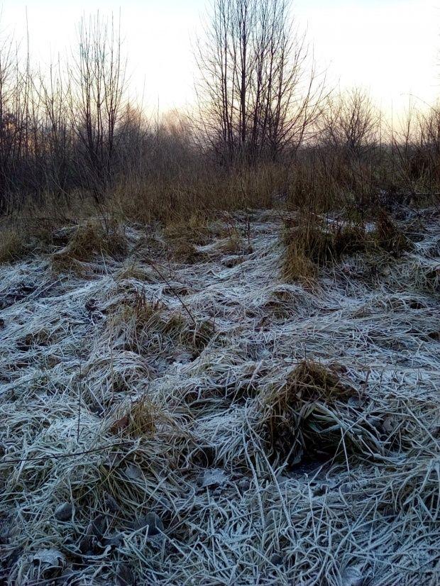 autor: jlez, Poland (tytuł: Natura 12 481 - zima, drzewa, łąka)