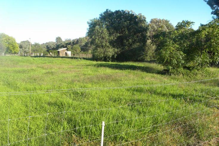 2467 Murringo Road Murringo NSW 2586 | Vacant Land for sale | domain.com.au
