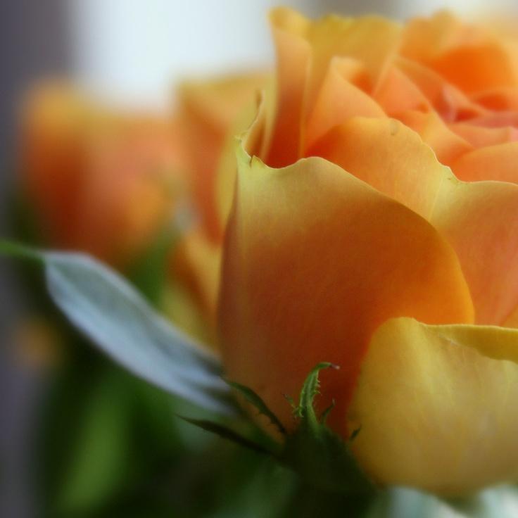 Deze oranje rozen bloeien uitbundig op de vaas.