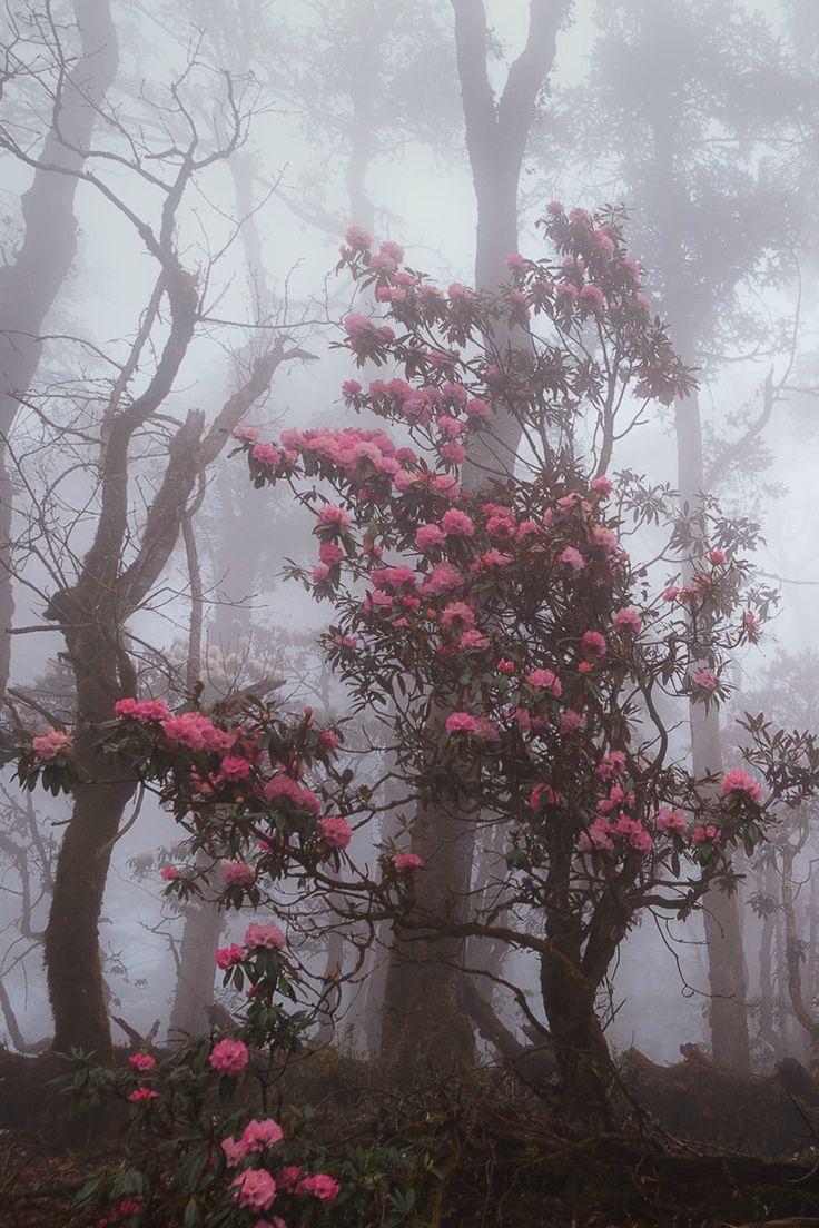 Fighting through the forest fog, Nepal by Dmitry Kupratsevich
