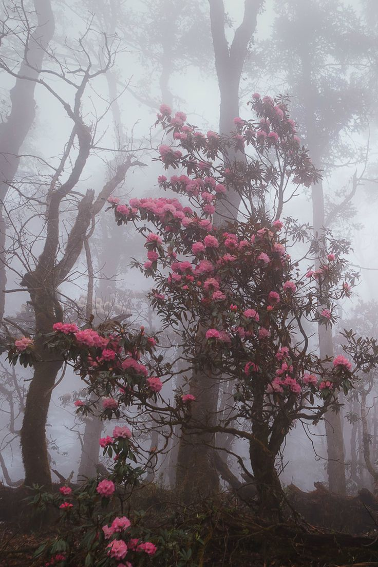 Fighting through the forest fog, Nepal by Dmitry Kupratsevich