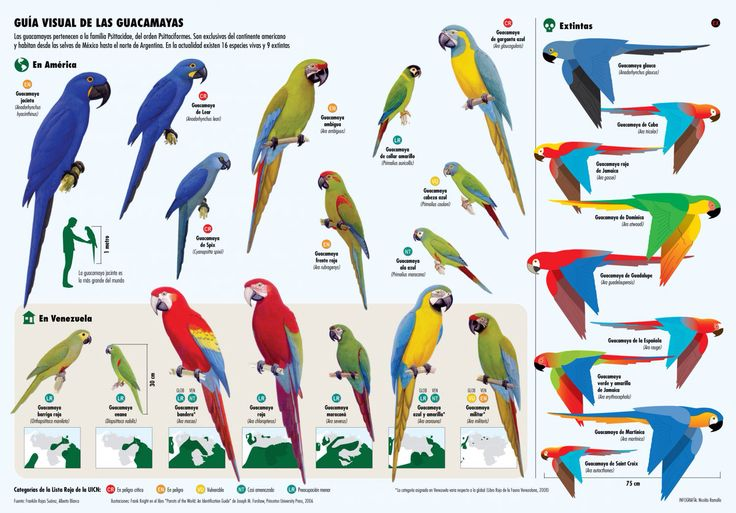 macaw species poster parrot and exotic bird stuff pinterest exotic birds and parakeets