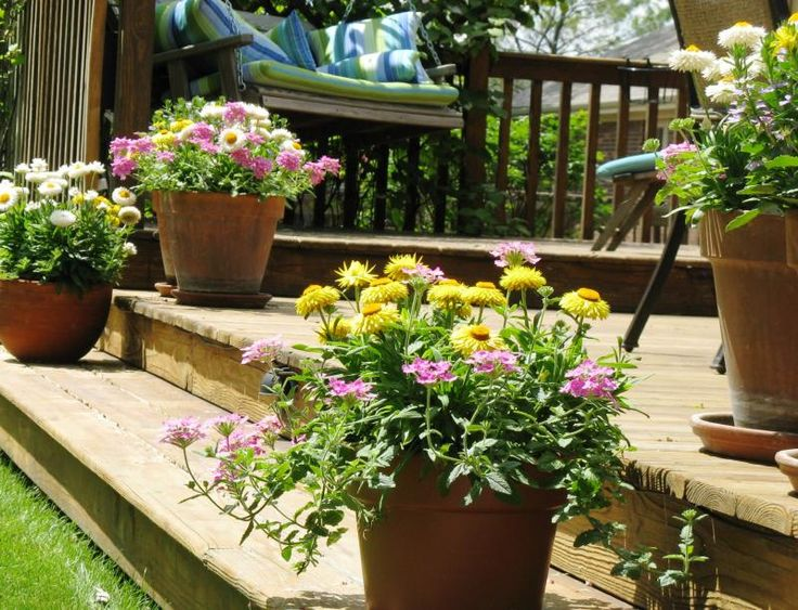 Container Gardens With Mixed Flowers For The Home