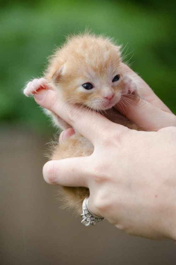 So tiny: Animal Energy, Kitty Cat, Pumpkin, Baby Kittens, Yellow Cat, Baby Puppys And Kittens, Cutest Kittens, Tiny Kittens, Tat Tights