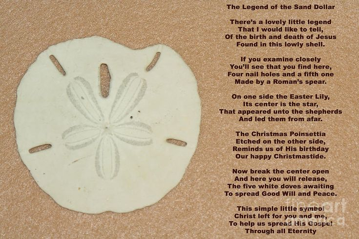 how to break open a sand dollar