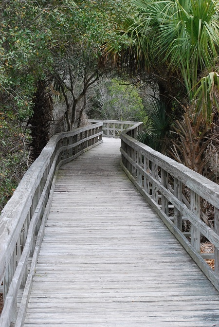 Click this pin to explore #Georgia's Cumberland Island! Loved this place!