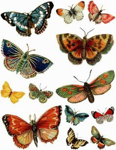 Blog with lots of printable butterflies