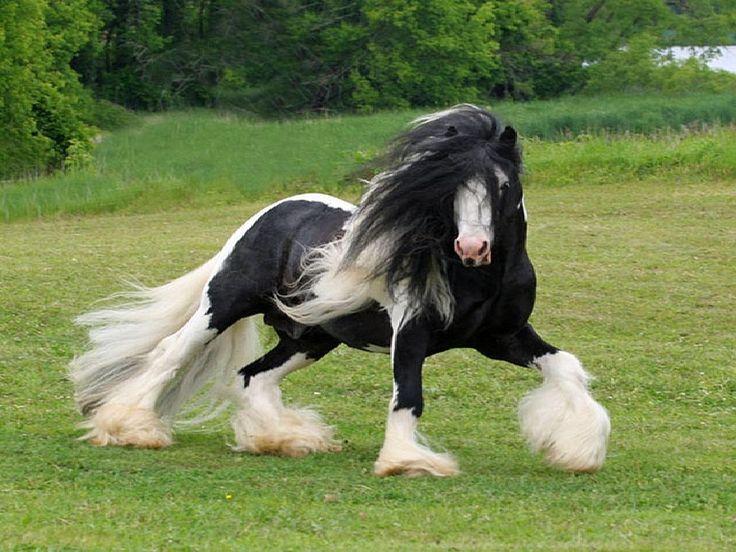 Fondo de pantalla de un caballo de doma