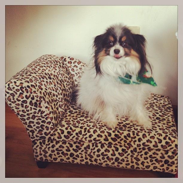 HomeGoods Dog beds, The o'jays and Pets
