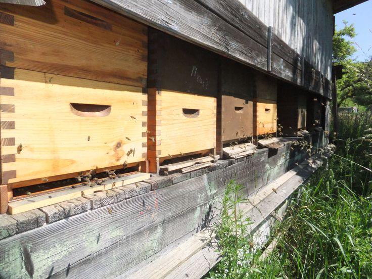 Bee-hives Bienen-Magazine