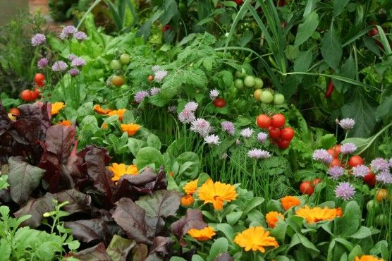 10 flowers to grow with vegetables. Companion Planting: How To Deter Pests and Encourage Beneficial Insects