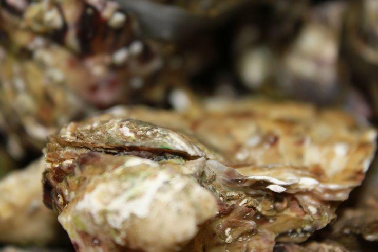 Le restaurant Escapades vous propose des assortiments d'huîtres !