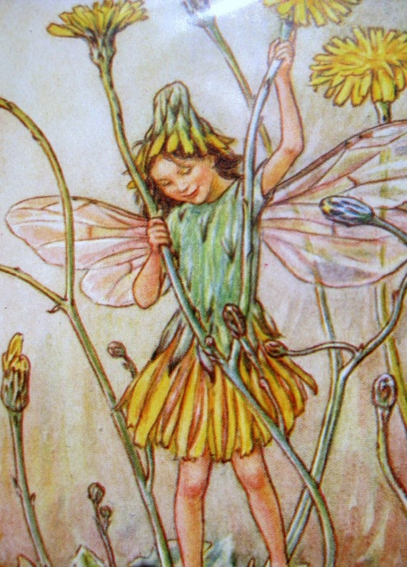 """""""The Cat's Ear Fairy"""" by Cicely Mary Barker."""