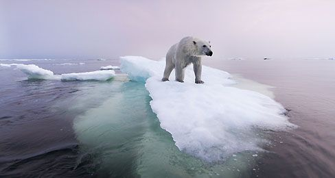 A Warming World | TIME For Kids A new report warns that climate change may push our planet over the edge: http://www.timeforkids.com/news/warming-world/155151