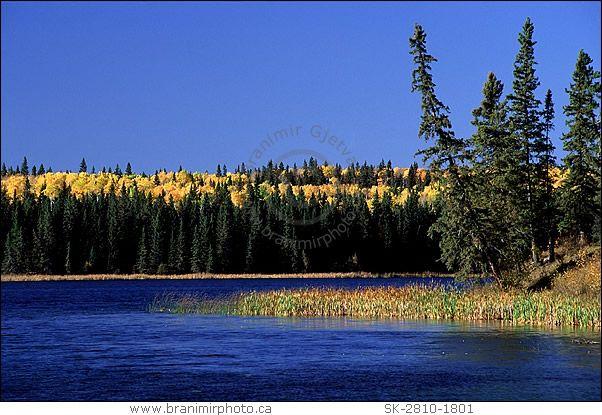 Mixed boreal forest in autumn at Prince Albert National Park, #Saskatchewan.