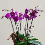 Orchid Gifts delivery services in Manhattan, NYC.
