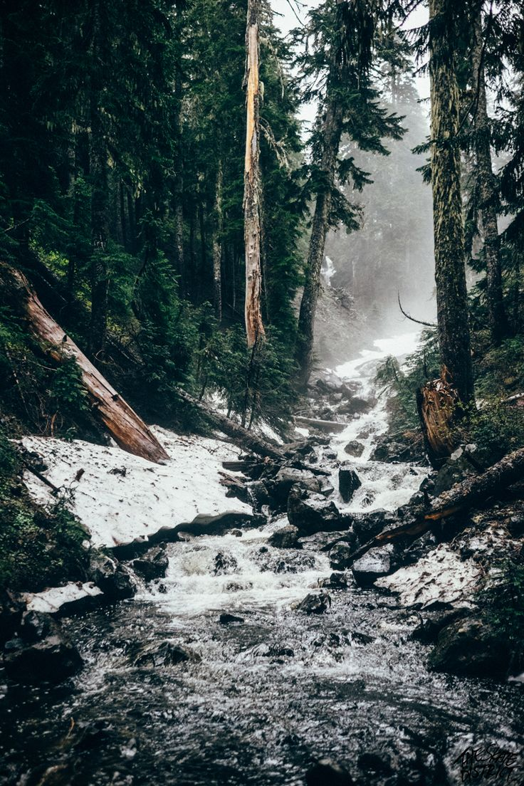 Wald | Schnee | Tannen | Kalte Luft                                                                                                                                                                                 Mehr