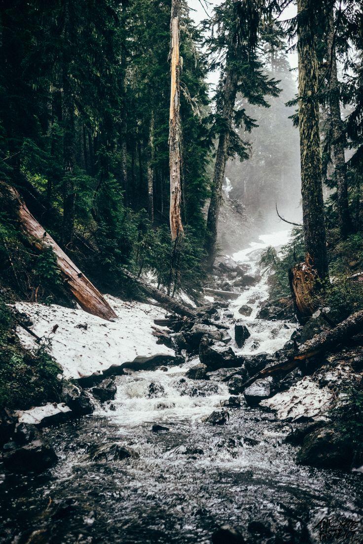 Wald | Schnee | Tannen | Kalte Luft