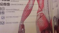 La tendinite du moyen fessier Cette tendinite souvent sportive peut faire penser à une maladie de la hanche. Elle se présente comme une douleur à la partie externe de la fesse à la montée de marches, ou aux premiers pas après une station assise prolongée,...