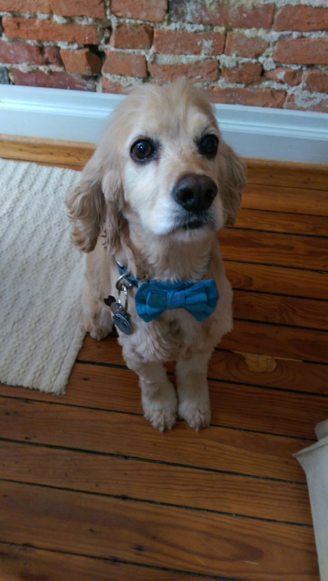 #AccountantDog #FairTrade #BowTiesAreCool #GlobalMamas