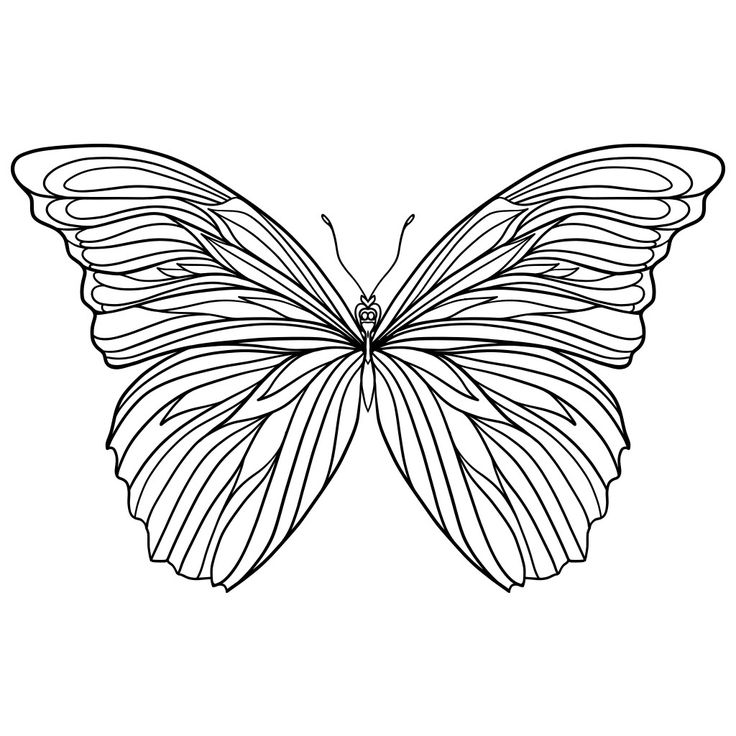 81 best Butterflies images on Pinterest | Coloring books, Drawings ...