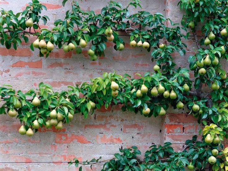 17 best ideas about weinpflanze on pinterest   balkon pflanzen, Garten Ideen