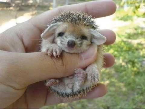 Cute baby hedgehog with a little girl singing it a song!! SO stinkin cute!
