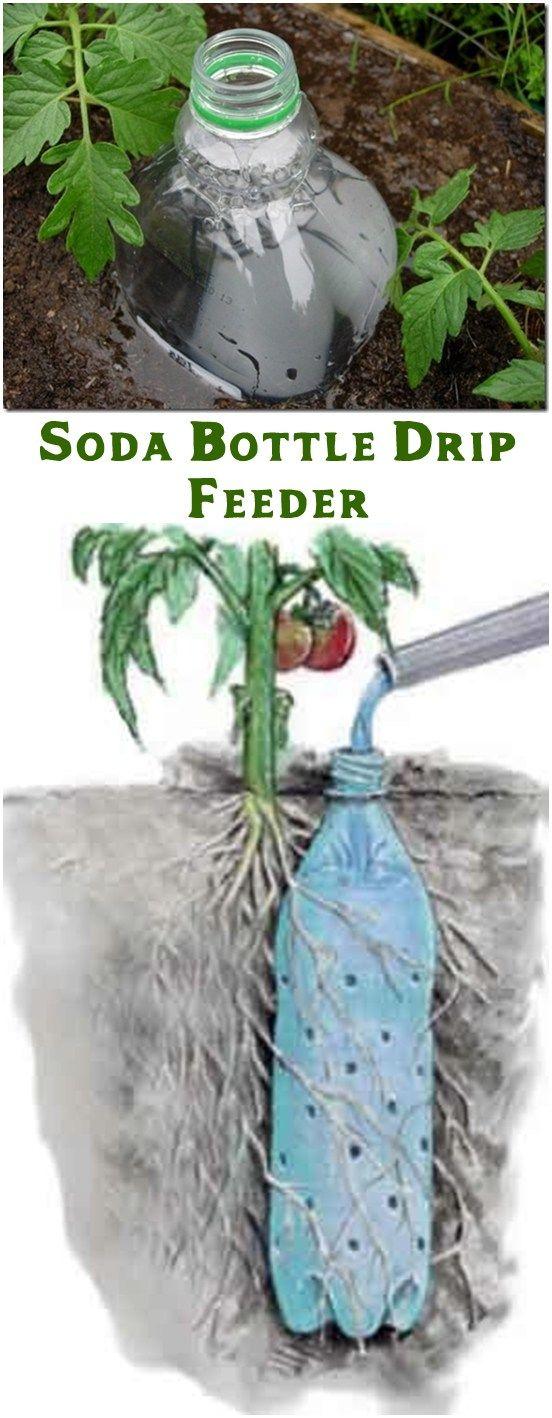 Soda Bottle Drip Feeder