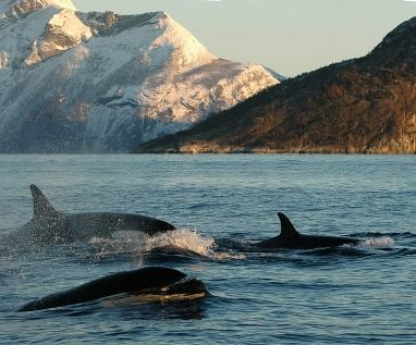 Norway - Lofoten islands - whale watching