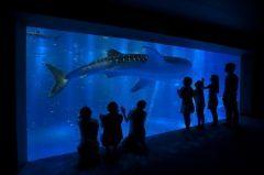 石川県七尾市能登島曲町ののとじま水族館は世界農業遺産に認定された能登の里海に囲まれた水族館です ジンベエザメ館 青の世界では世界最大の魚ジンベエザメを始めアカシュモクザメやトビエイの仲間などたくさんの魚たちを様々な角度から観察することができます また季節に応じ内容を凝らしたイルカアシカショーやゴマフアザラシコツメカワウソなどの動物たちとも触れ合えるイベントも充実しています 幻想的な雰囲気を演出したクラゲの光アートもオススメですよ  tags[石川県]