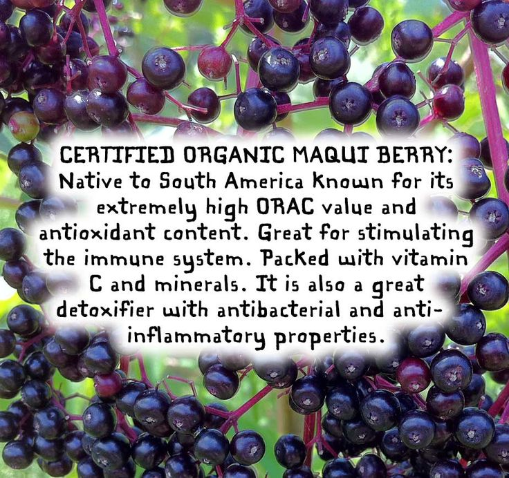 Maqui Berry  #maqui #maquiberry #maquiberries