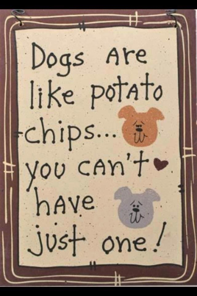 I know I can't!: Potatoes Chips, Animal Shelters, Dogs,  Dust Jackets, Pets,  Dust Covers, Fur Baby, True Stories,  Dust Wrappers