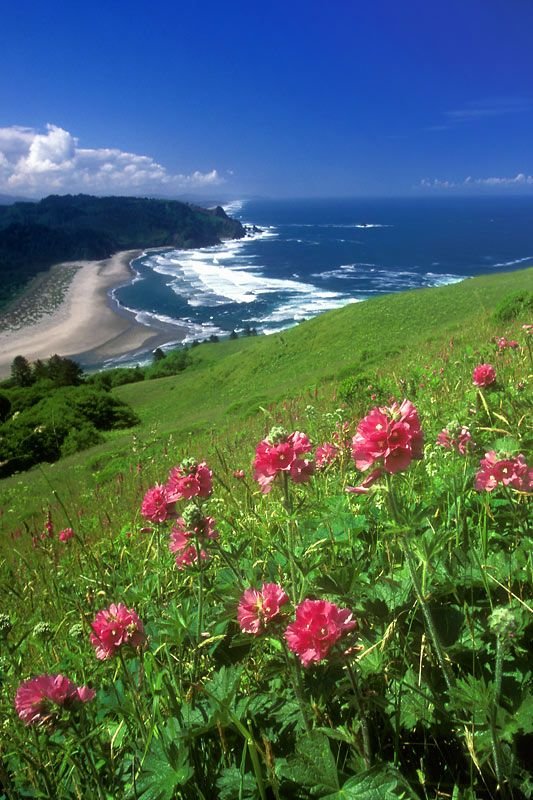 Cascade Head, Oregon Coast sits North of Lincoln City and South of Neskowin.  On a clear day this is what you get once you reach the top! So worth the hike!!