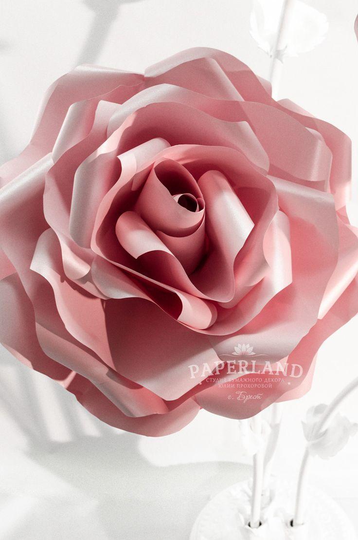 Большие розовые розы
