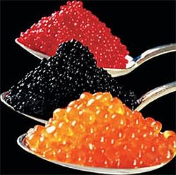 "www.kaviaarkoning.nl - Caviar, sometimes called black caviar, is a luxury delicacy, consisting of processed, salted, non-fertilized sturgeon roe.The roe can be ""fresh"" (non-pasteurized) or pasteurized, the latter having much less culinary and economic value.Traditionally the designation caviar is only used for sturgeon roe from the wild sturgeon species living in the Caspian and Black Sea  (Beluga, Ossetra and Sevruga caviars)."