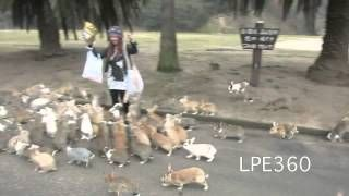 A Herd Of Rabbits Running - First saw it on Letterman - I almost died laughing!  Act Of Kindness