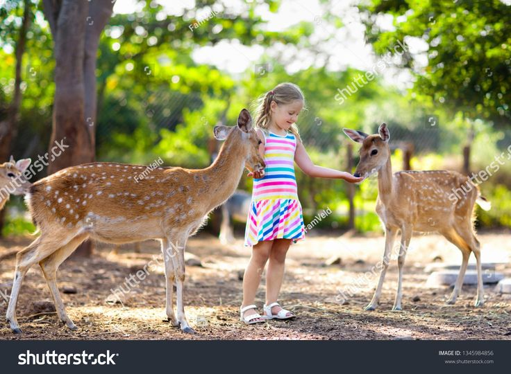 Child feeding wild deer at petting zoo. Kids feed animals at outdoor safari park…