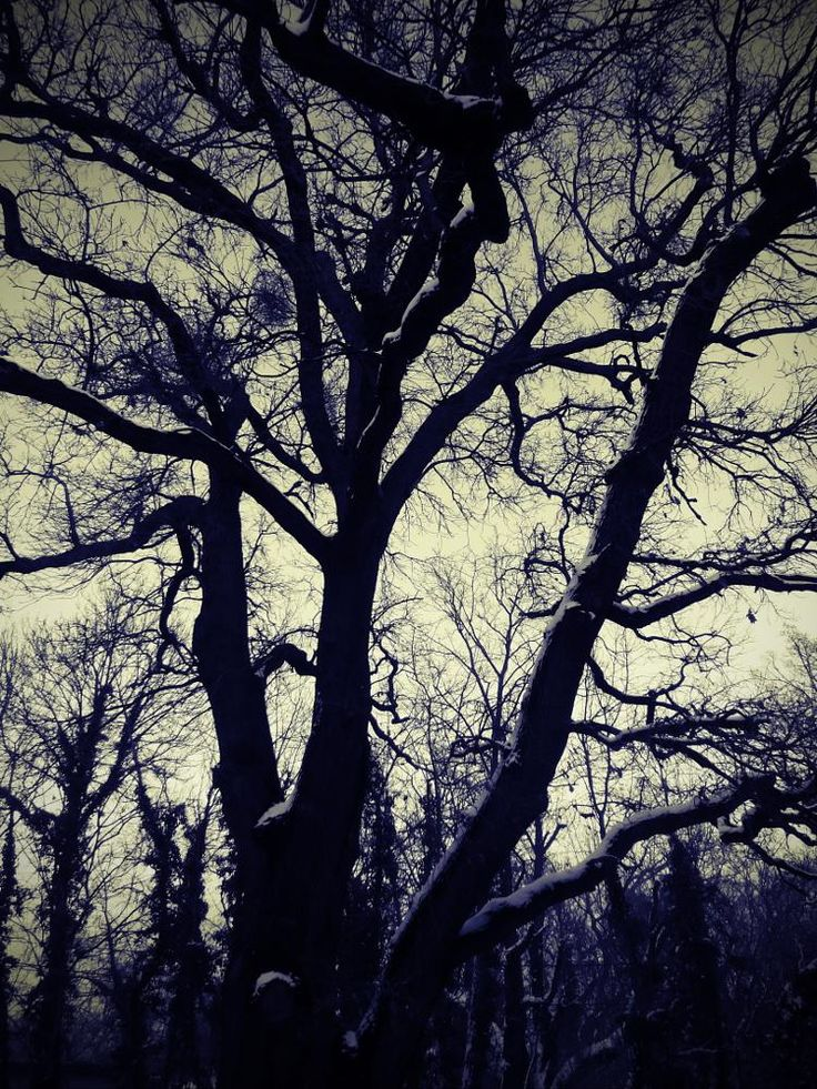 In the Park  by Mária Nagy