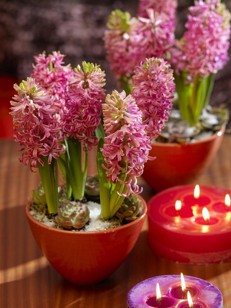 hyasintti Flowerpot