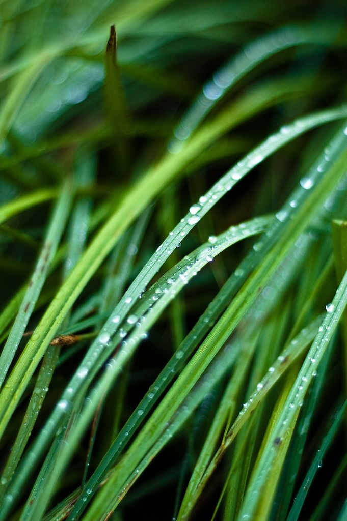Morning Dew by froca-Sweet the rain's new fall, sunlight from heaven.   Like the first dewfall, on the first grass.   Praise for the sweetnes of the wet garden,   Sprung in completeness where His feet pass.