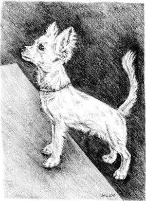 Zeichnung, Bleistift, Bleistiftzeichnung, Hund, Chihuahua