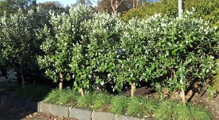 The Case for Edible Hedges | Deep Green Permaculture