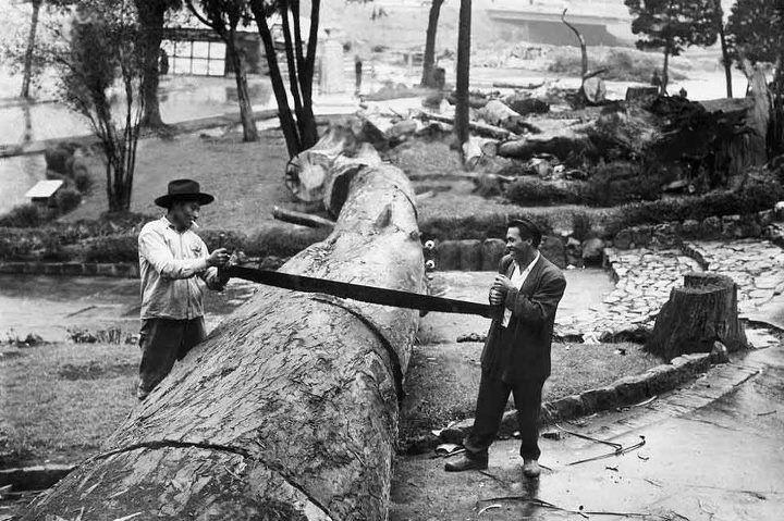 1910, Parque de la Independencia, Bogotá, Colombia